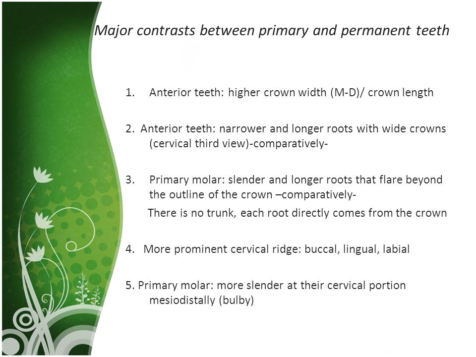Major contrasts between primary and permanent teeth 1.Anterior teeth: higher crown width (M-D)/ crown length 2. Anterior teeth: narrower and longer ro