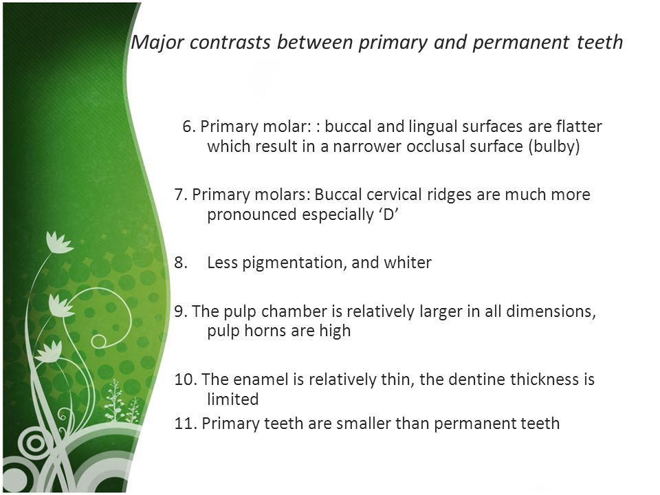 Major contrasts between primary and permanent teeth 6. Primary molar: : buccal and lingual surfaces are flatter which result in a narrower occlusal su