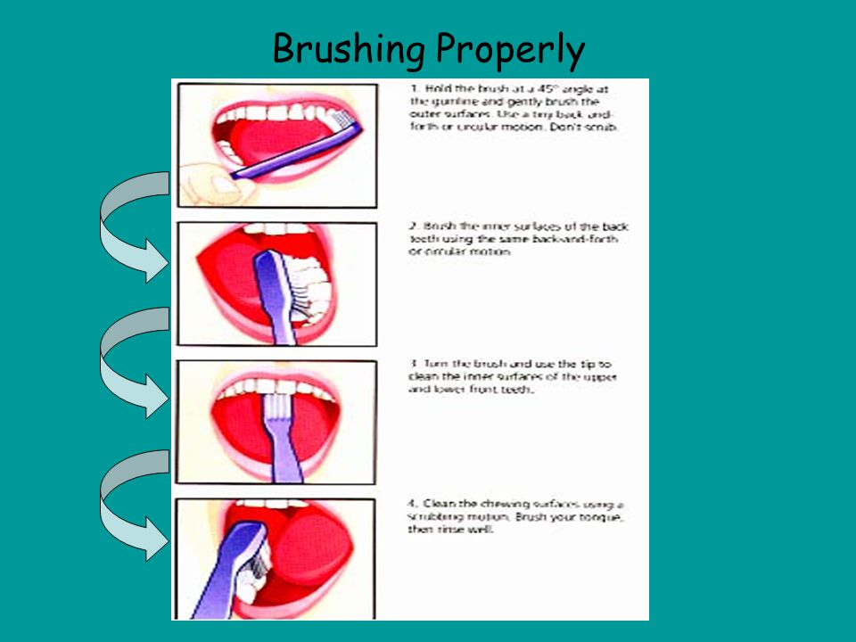 Brushing Important Facts –Use a toothbrush that you prefer, but make sure that it has soft bristles. –Use a pea sized amount of toothpaste with fluori