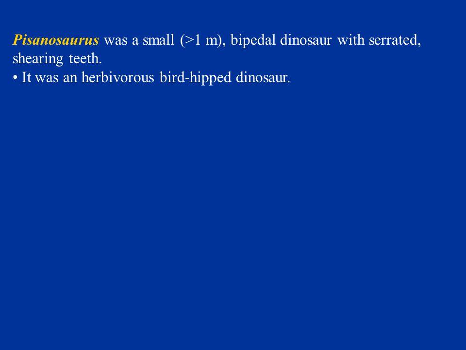 Pisanosaurus was a small (>1 m), bipedal dinosaur with serrated, shearing teeth. It was an herbivorous bird-hipped dinosaur.