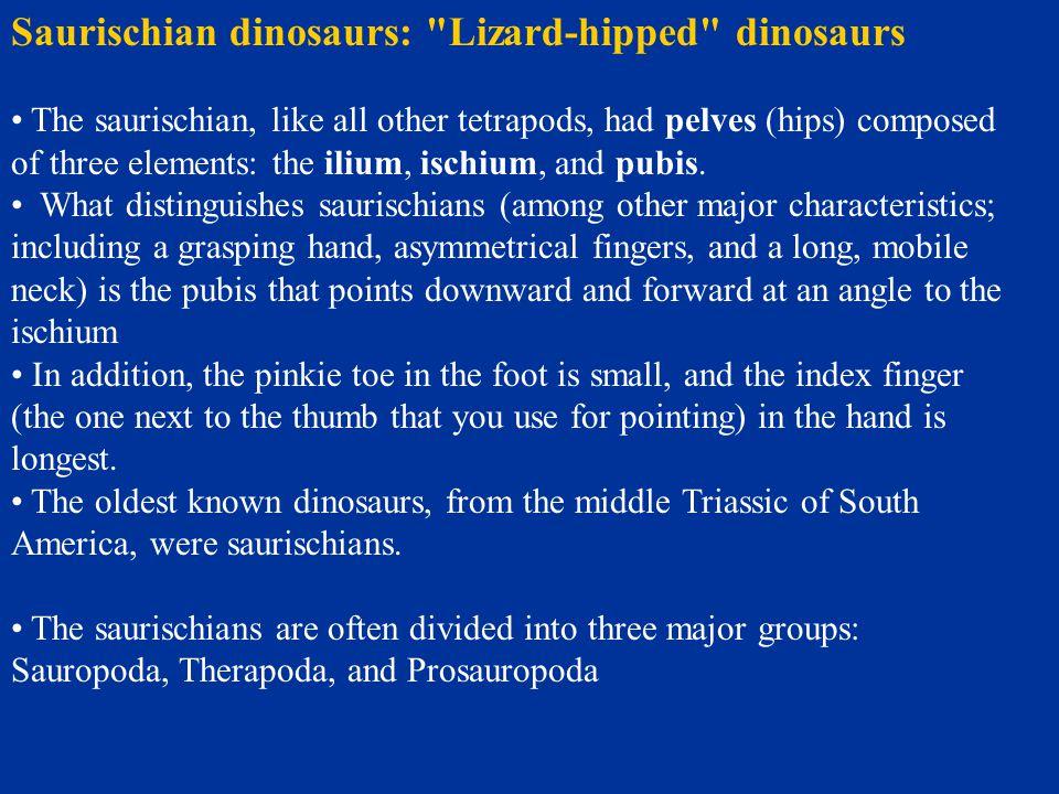 Saurischian dinosaurs: