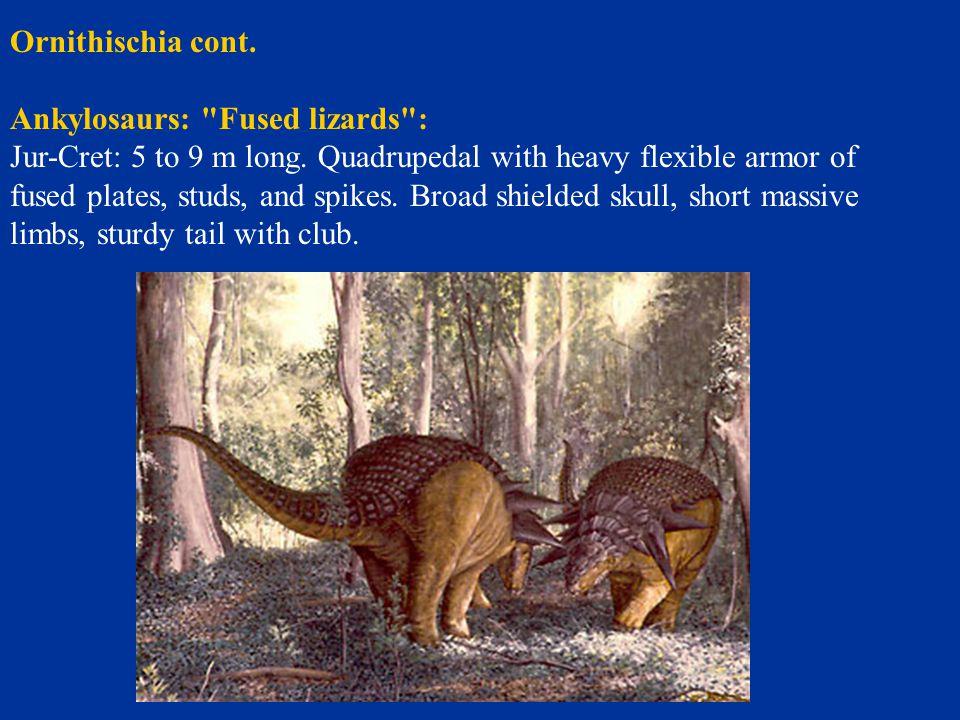 Ornithischia cont. Ankylosaurs: