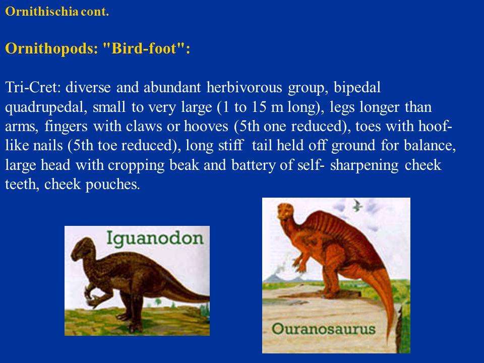 Ornithischia cont. Ornithopods: