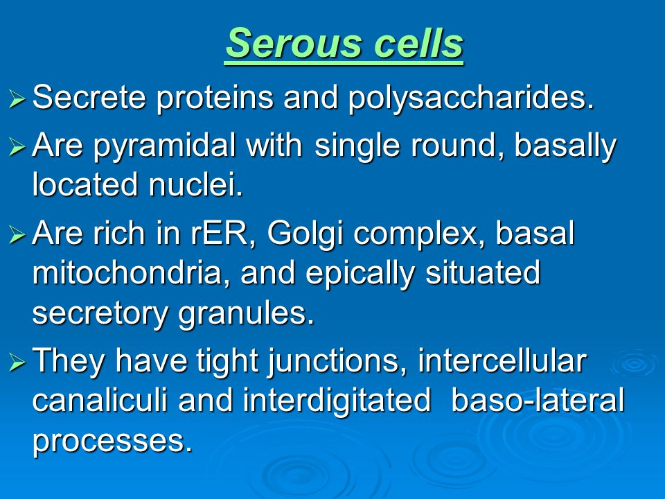 Serous cells Secrete proteins and polysaccharides. Secrete proteins and polysaccharides. Are pyramidal with single round, basally located nuclei. Are