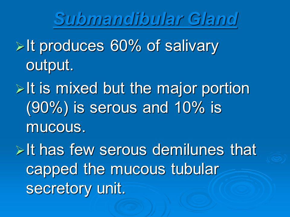 Submandibular Gland It produces 60% of salivary output. It produces 60% of salivary output. It is mixed but the major portion (90%) is serous and 10%
