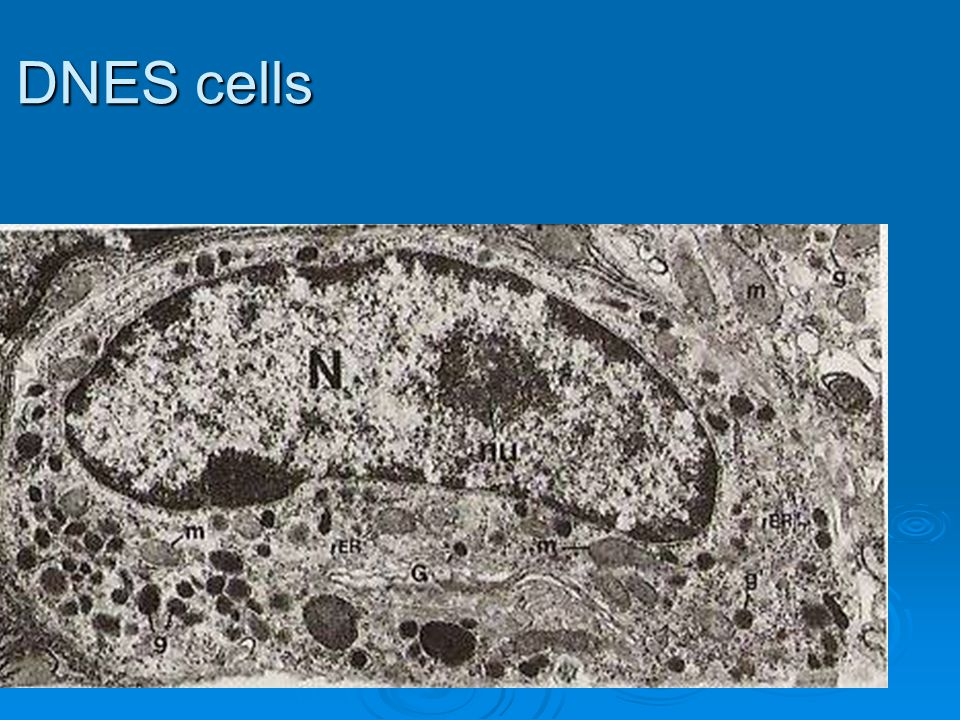 DNES cells