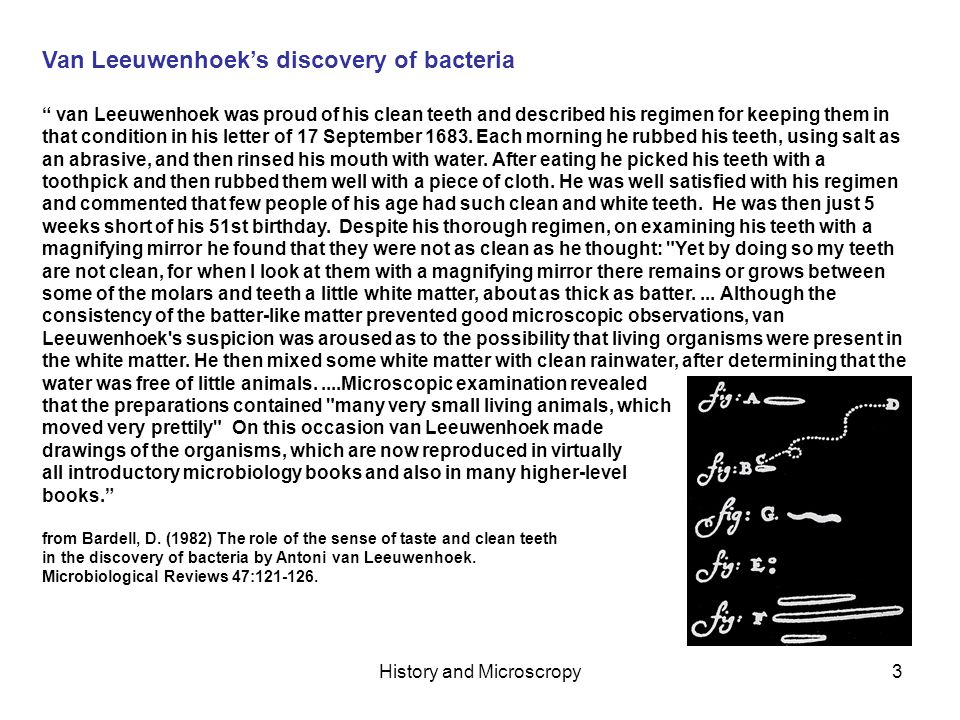 History and Microscropy3 Van Leeuwenhoeks discovery of bacteria van Leeuwenhoek was proud of his clean teeth and described his regimen for keeping them in that condition in his letter of 17 September 1683.
