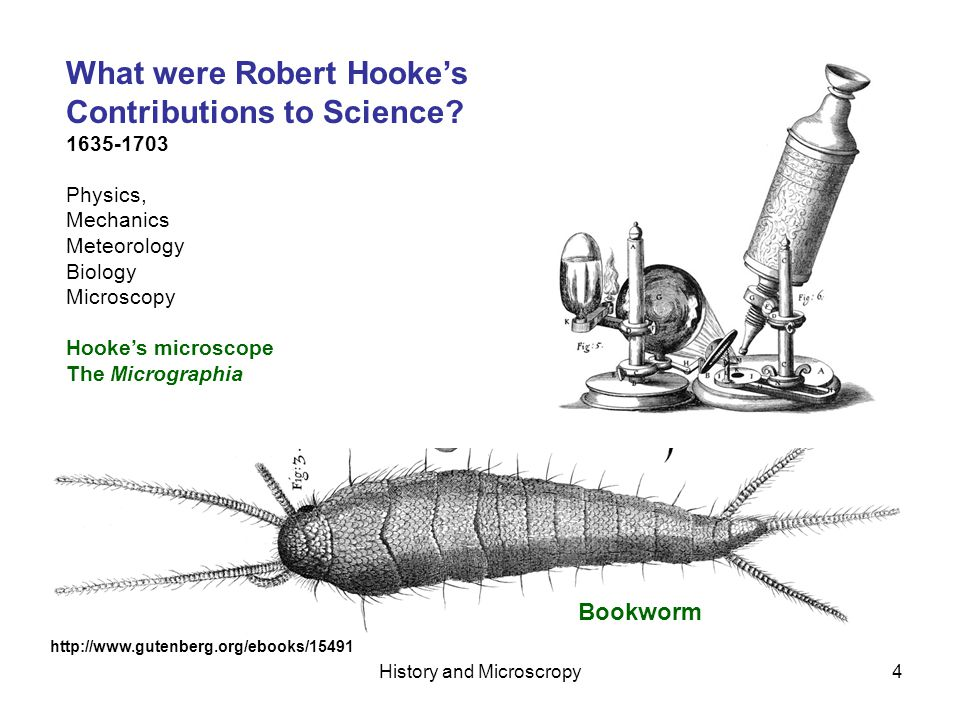 History and Microscropy5 Hooke wrote that cork consists of … solid or hardened froth, or a congeries of very small bubbles consolidated in that form, into a pretty stiff as well as tough concrete, and that each Cavern, Bubble, or Cell, is definitely separate from any of the rest, without any kind of hole in the encompassing films… He wondered about nutrient transport in plants… But though I could not with my Microscope, nor with my breath, nor any other way I have yet tried, discover a passage out of one of those cavities into another, yet I cannot thence conclude, that therefore there are none such, by which the Succus nutritius, or appropriate juices of Vegetables, may pass through them; for, in several of those Vegetables, whilst green, I have with my Microscope, plainly enough discovered these Cells or Poles filled with juices… Now, though I have with great diligence endeavoured to find whether there be any such thing in those Microscopical pores of Wood or Piths, as the valves in the heart, veins, and other passages of Animals, that open and give passage to the contained fluid juices one way, and shut themselves, and impede the passage of such liquors back again, yet have I not hitherto been able to say anything positive in it; though, me thinks, it seems very probable, that Nature has in these passages, as well as in those of Animal bodies, very many appropriated Instruments and contrivances, whereby to bring her designs and end to pass, which tis not improbable, but that some diligent observer, if helped with better Microscopes, may in time detect.