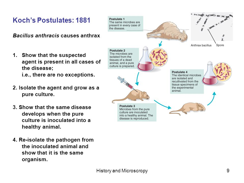 History and Microscropy9 Kochs Postulates: 1881 Bacillus anthracis causes anthrax 1.Show that the suspected agent is present in all cases of the disease; i.e., there are no exceptions.