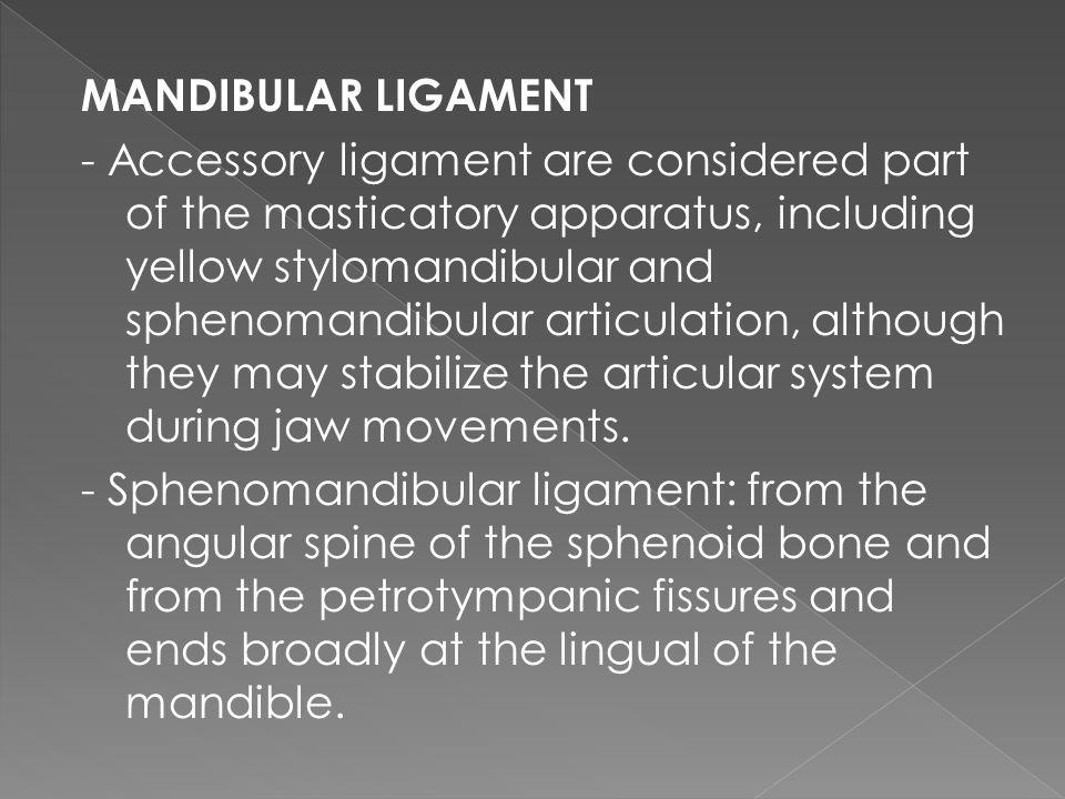 MANDIBULAR LIGAMENT - Accessory ligament are considered part of the masticatory apparatus, including yellow stylomandibular and sphenomandibular artic