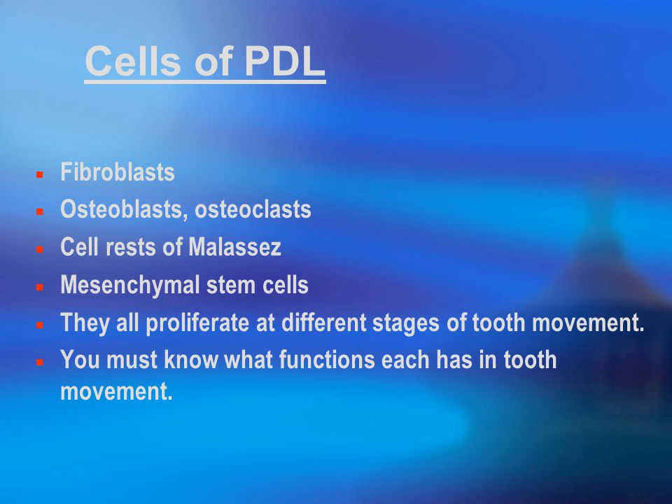 Cells of PDL Fibroblasts Osteoblasts, osteoclasts Cell rests of Malassez Mesenchymal stem cells They all proliferate at different stages of tooth movement.