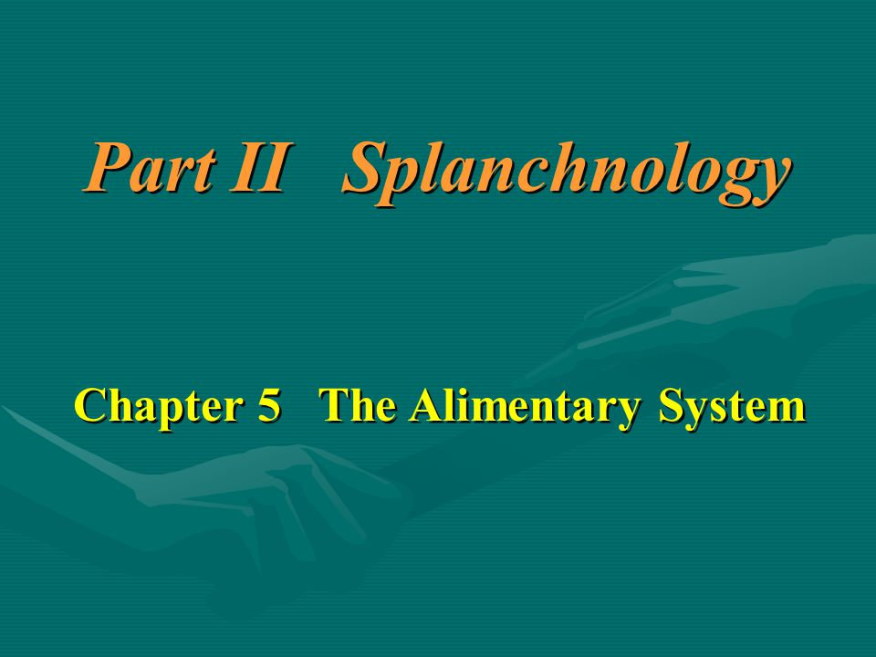Part II Splanchnology Chapter 5 The Alimentary System Part II Splanchnology Chapter 5 The Alimentary System