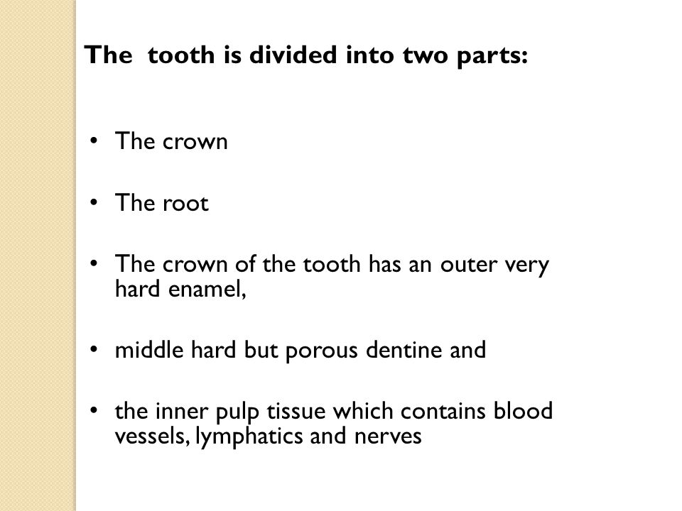 The root has a bony hard cementum The middle layer dentine The pulp tissue.