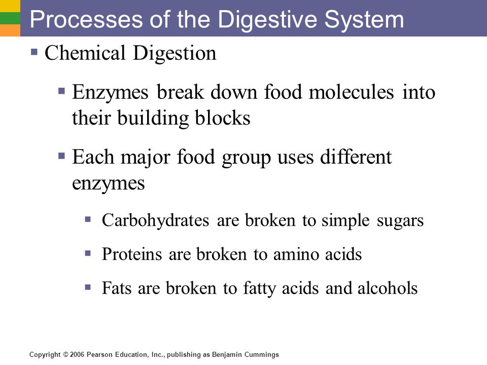 Copyright © 2006 Pearson Education, Inc., publishing as Benjamin Cummings Processes of the Digestive System Chemical Digestion Enzymes break down food molecules into their building blocks Each major food group uses different enzymes Carbohydrates are broken to simple sugars Proteins are broken to amino acids Fats are broken to fatty acids and alcohols