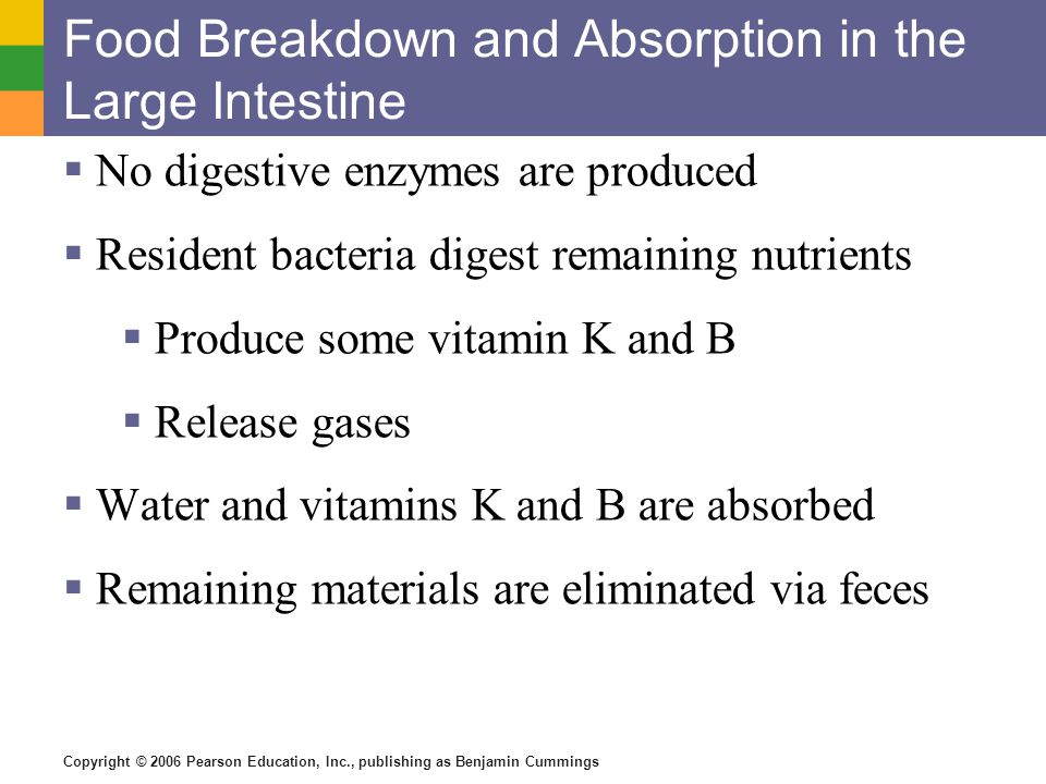 Copyright © 2006 Pearson Education, Inc., publishing as Benjamin Cummings Food Breakdown and Absorption in the Large Intestine No digestive enzymes are produced Resident bacteria digest remaining nutrients Produce some vitamin K and B Release gases Water and vitamins K and B are absorbed Remaining materials are eliminated via feces