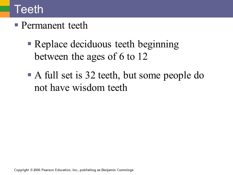 Copyright © 2006 Pearson Education, Inc., publishing as Benjamin Cummings Teeth Permanent teeth Replace deciduous teeth beginning between the ages of 6 to 12 A full set is 32 teeth, but some people do not have wisdom teeth