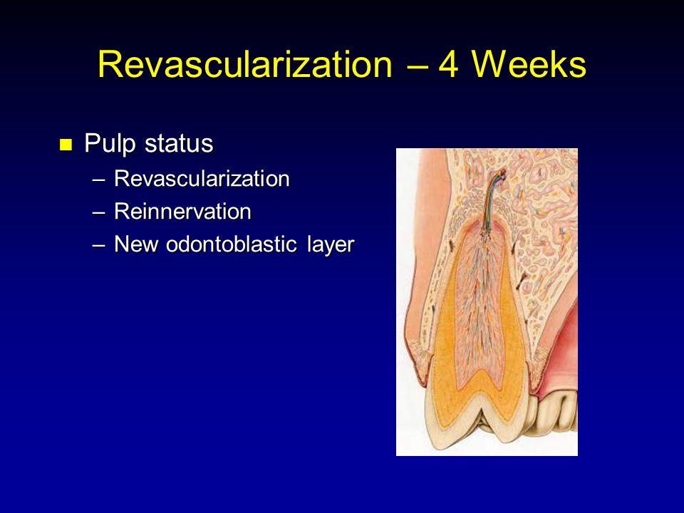 Revascularization – 4 Weeks Pulp status Pulp status –Revascularization –Reinnervation –New odontoblastic layer