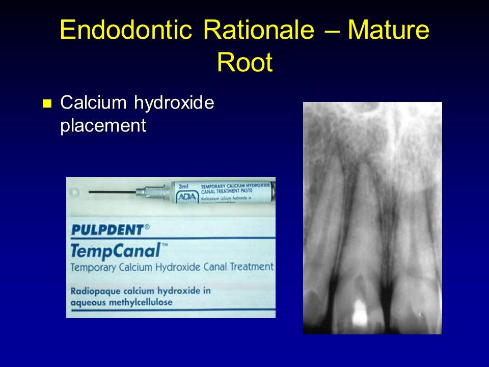 Endodontic Rationale – Mature Root Calcium hydroxide placement Calcium hydroxide placement