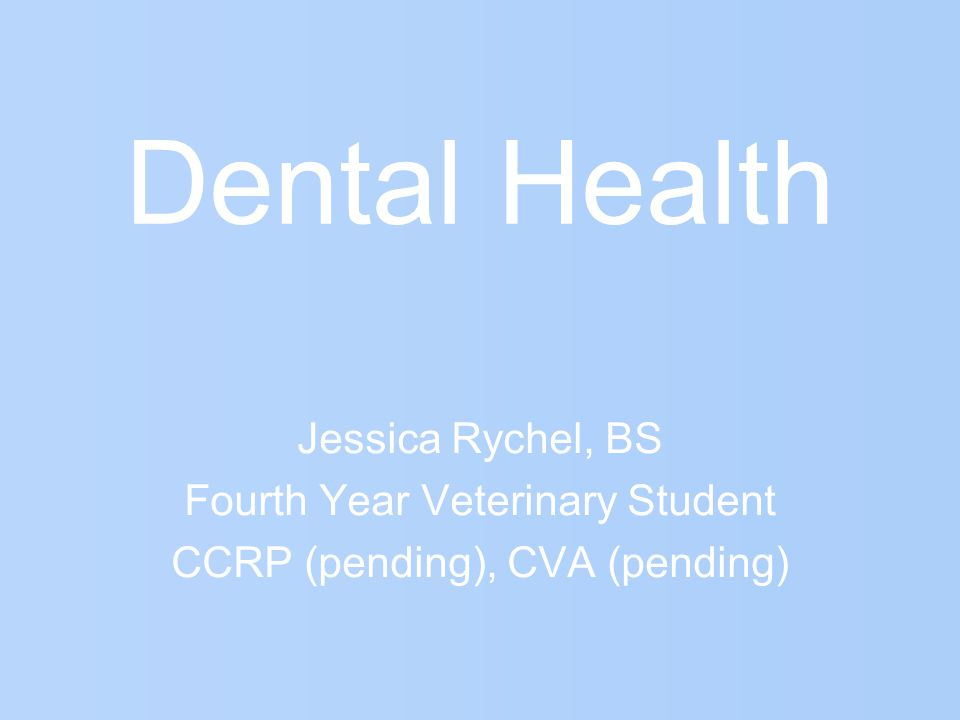 Dental Health Jessica Rychel, BS Fourth Year Veterinary Student CCRP (pending), CVA (pending)
