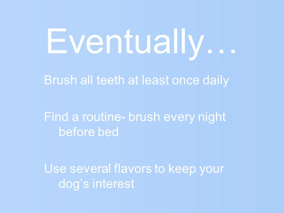 Eventually… Brush all teeth at least once daily Find a routine- brush every night before bed Use several flavors to keep your dogs interest