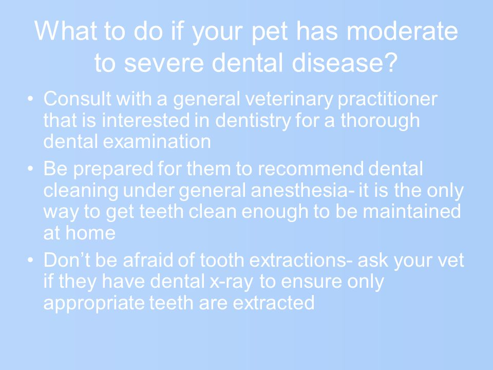 What to do if your pet has moderate to severe dental disease.