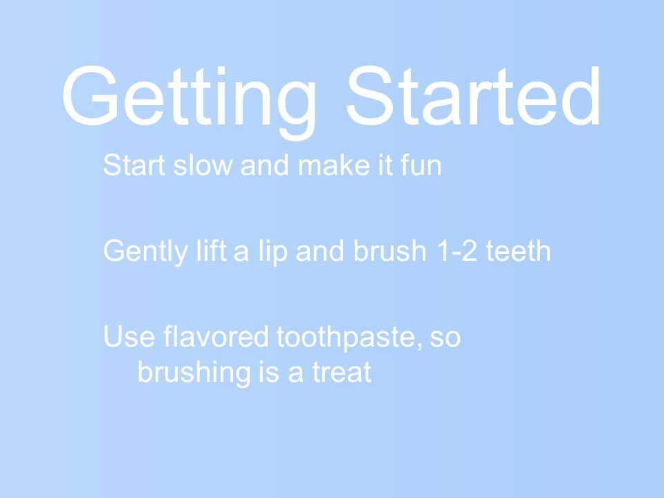 Getting Started Start slow and make it fun Gently lift a lip and brush 1-2 teeth Use flavored toothpaste, so brushing is a treat