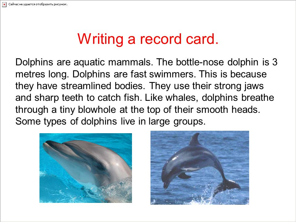 Now write a record card about a sea creature.