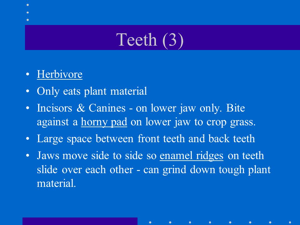 Teeth (3) Herbivore Only eats plant material Incisors & Canines - on lower jaw only. Bite against a horny pad on lower jaw to crop grass. Large space