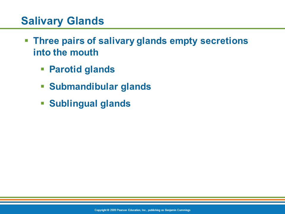 Copyright © 2009 Pearson Education, Inc., publishing as Benjamin Cummings Salivary Glands Three pairs of salivary glands empty secretions into the mou
