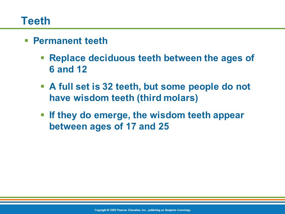 Copyright © 2009 Pearson Education, Inc., publishing as Benjamin Cummings Teeth Permanent teeth Replace deciduous teeth between the ages of 6 and 12 A