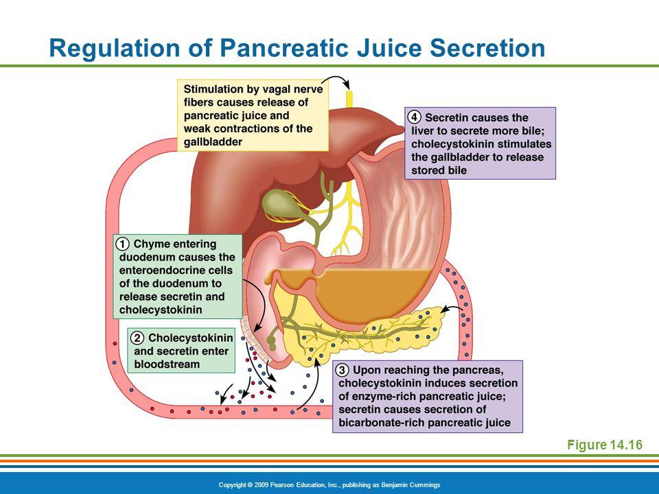 Copyright © 2009 Pearson Education, Inc., publishing as Benjamin Cummings Figure 14.16 Regulation of Pancreatic Juice Secretion