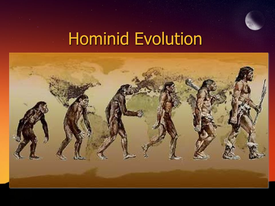 Origins of Hominids Most crucial change was Bipedal Locomotion Other changes include Expansion of the brain, larger birth canal, reduction of face, teeth and jaws All of these occurred 2 million yrs.