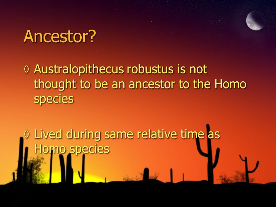 Ancestor? Australopithecus robustus is not thought to be an ancestor to the Homo species Lived during same relative time as Homo species Australopithe