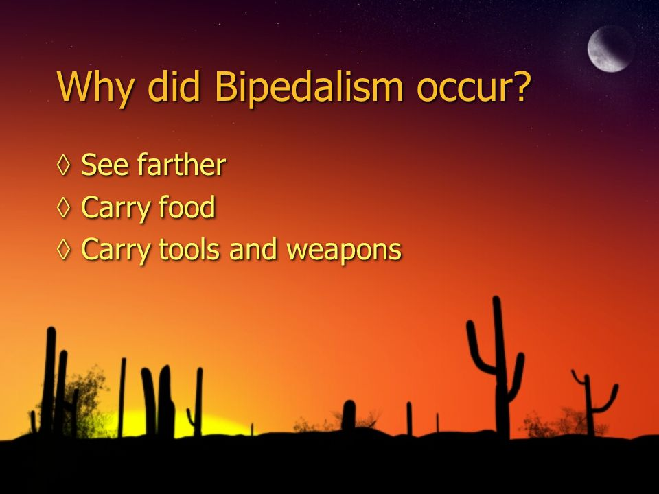 Why did Bipedalism occur? See farther Carry food Carry tools and weapons See farther Carry food Carry tools and weapons