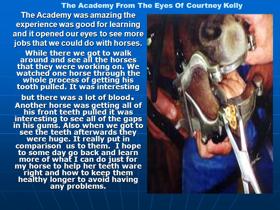 The Academy was amazing the experience was good for learning and it opened our eyes to see more jobs that we could do with horses.