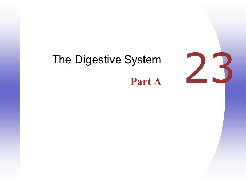23 The Digestive System Part A