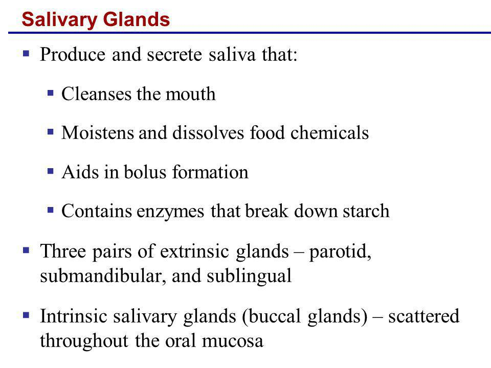Salivary Glands Produce and secrete saliva that: Cleanses the mouth Moistens and dissolves food chemicals Aids in bolus formation Contains enzymes tha