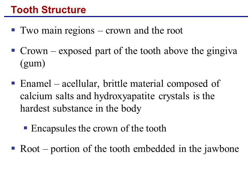 Tooth Structure Two main regions – crown and the root Crown – exposed part of the tooth above the gingiva (gum) Enamel – acellular, brittle material c