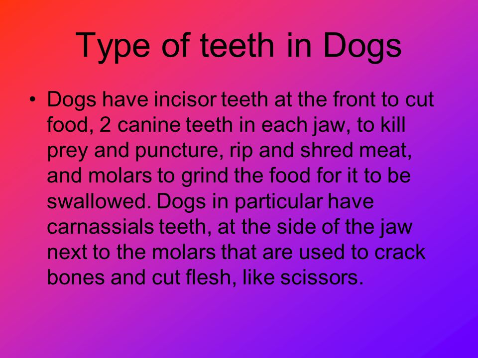 Type of teeth in Dogs Dogs have incisor teeth at the front to cut food, 2 canine teeth in each jaw, to kill prey and puncture, rip and shred meat, and molars to grind the food for it to be swallowed.