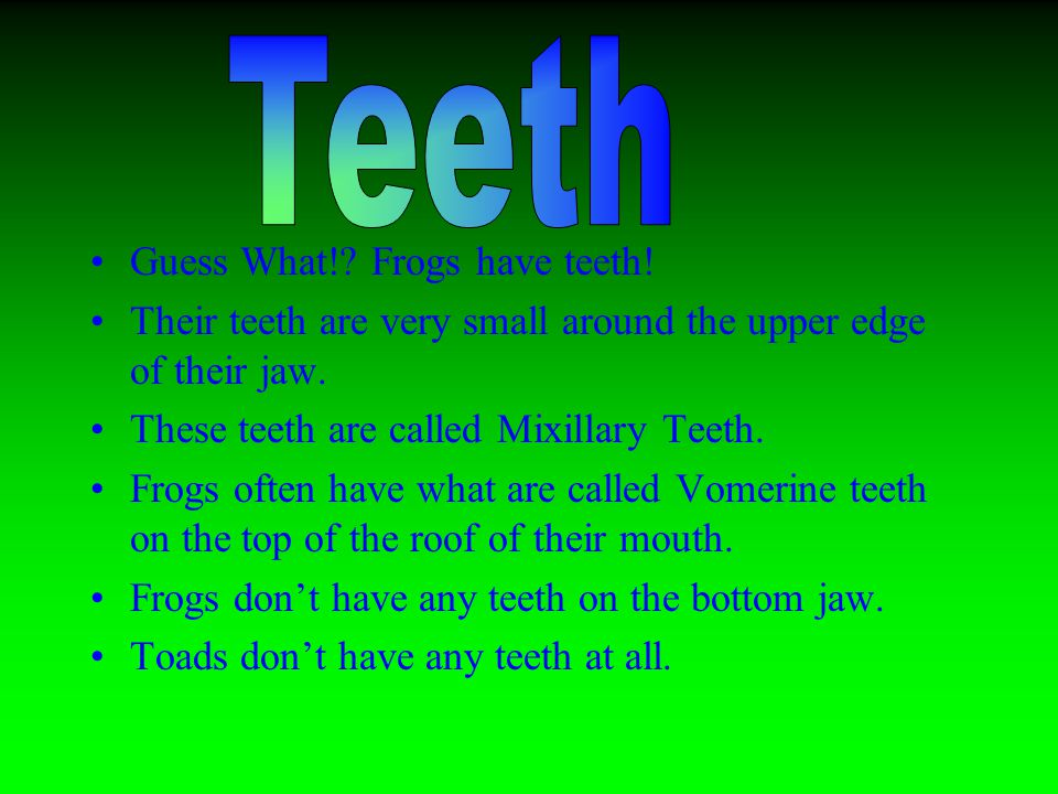 Guess What!. Frogs have teeth. Their teeth are very small around the upper edge of their jaw.