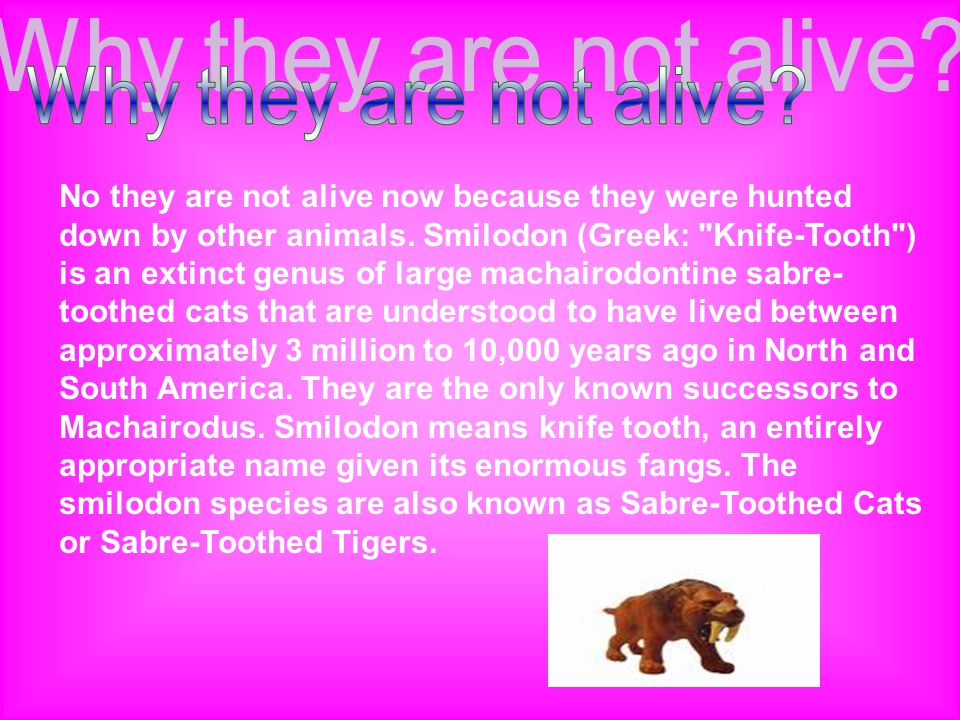 No they are not alive now because they were hunted down by other animals. Smilodon (Greek: