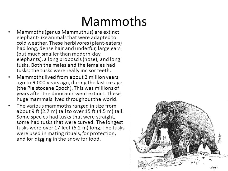 Mammoths Mammoths (genus Mammuthus) are extinct elephant-like animals that were adapted to cold weather. These herbivores (plant-eaters) had long, den
