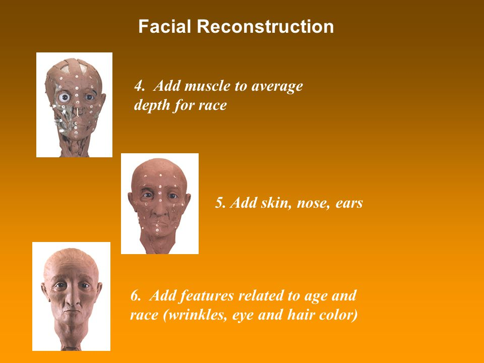 Facial Reconstruction 4. Add muscle to average depth for race 5. Add skin, nose, ears 6. Add features related to age and race (wrinkles, eye and hair