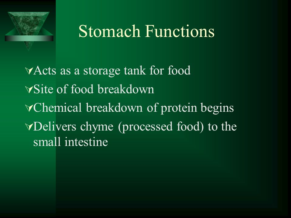 Stomach Functions Acts as a storage tank for food Site of food breakdown Chemical breakdown of protein begins Delivers chyme (processed food) to the s