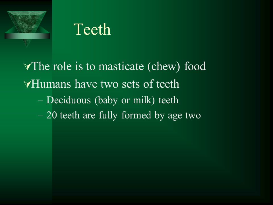 Teeth The role is to masticate (chew) food Humans have two sets of teeth –Deciduous (baby or milk) teeth –20 teeth are fully formed by age two