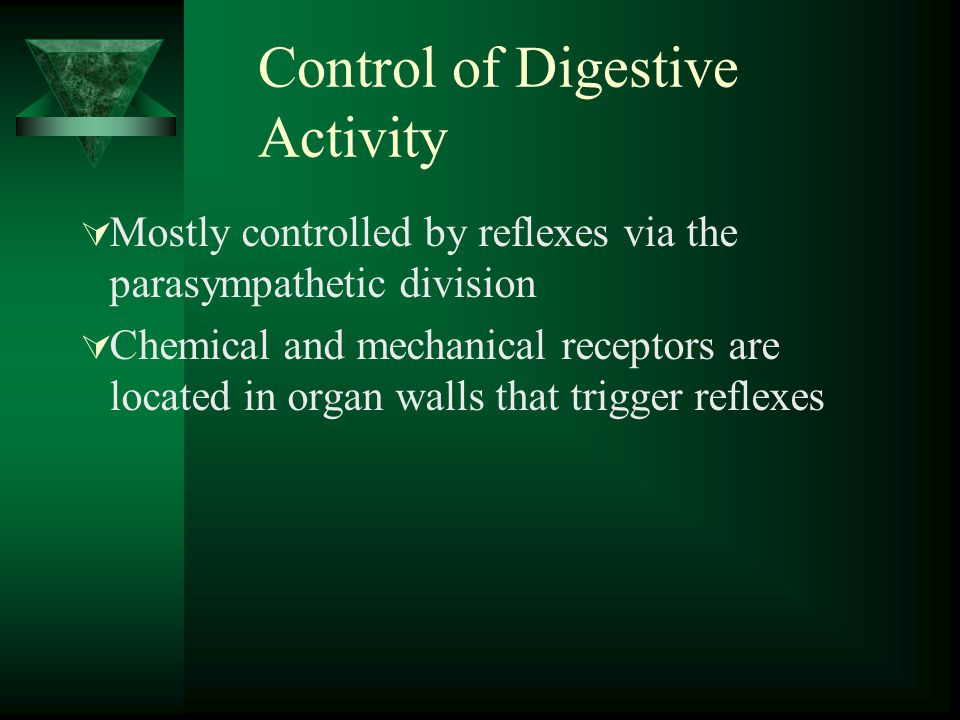Control of Digestive Activity Mostly controlled by reflexes via the parasympathetic division Chemical and mechanical receptors are located in organ wa