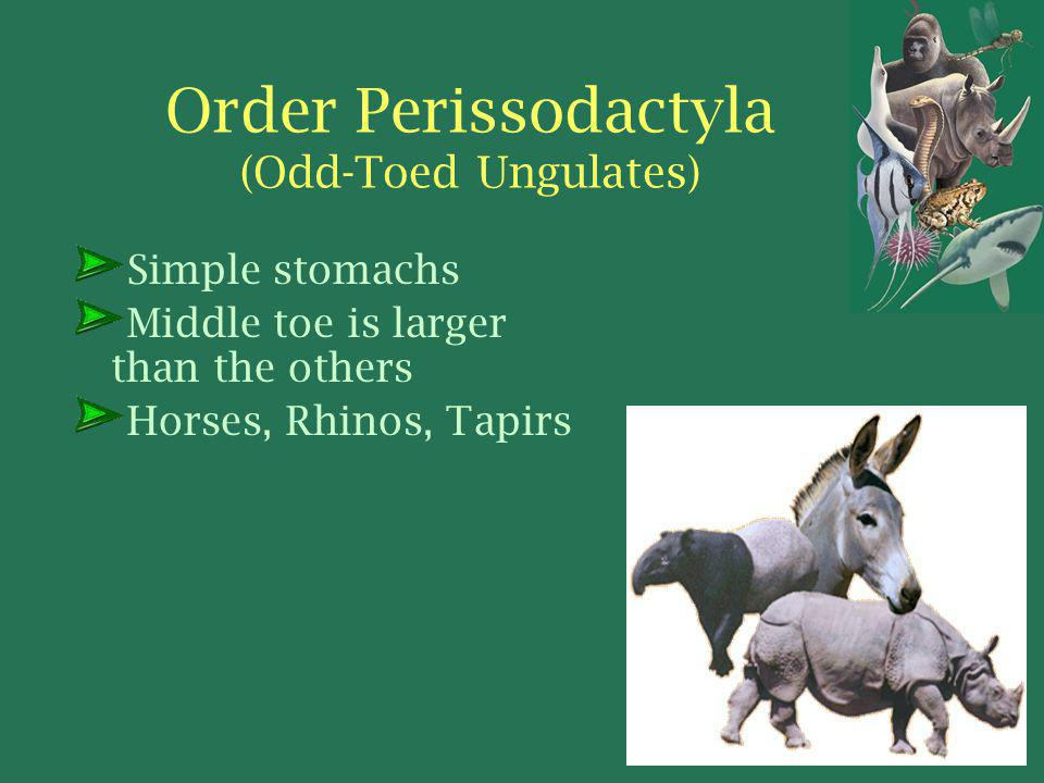 Order Perissodactyla (Odd-Toed Ungulates) Simple stomachs Middle toe is larger than the others Horses, Rhinos, Tapirs
