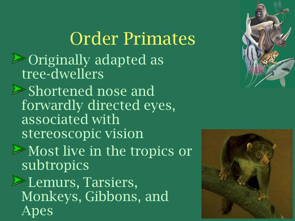 Order Primates Originally adapted as tree-dwellers Shortened nose and forwardly directed eyes, associated with stereoscopic vision Most live in the tropics or subtropics Lemurs, Tarsiers, Monkeys, Gibbons, and Apes