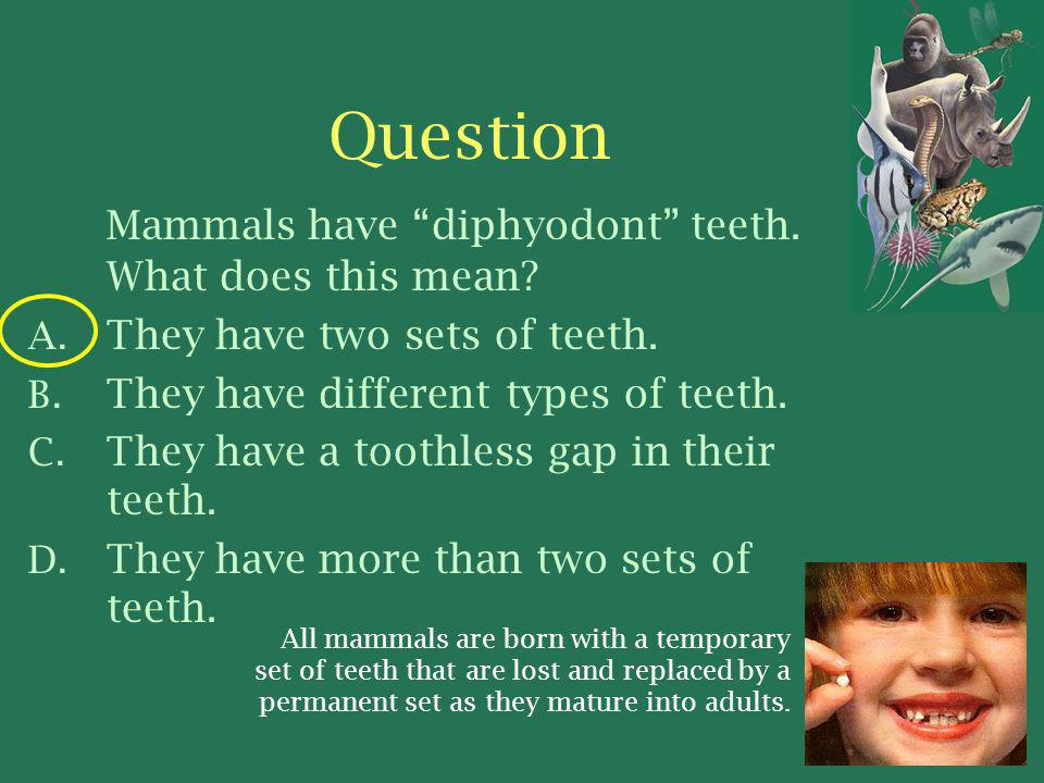Question Mammals have diphyodont teeth.What does this mean.