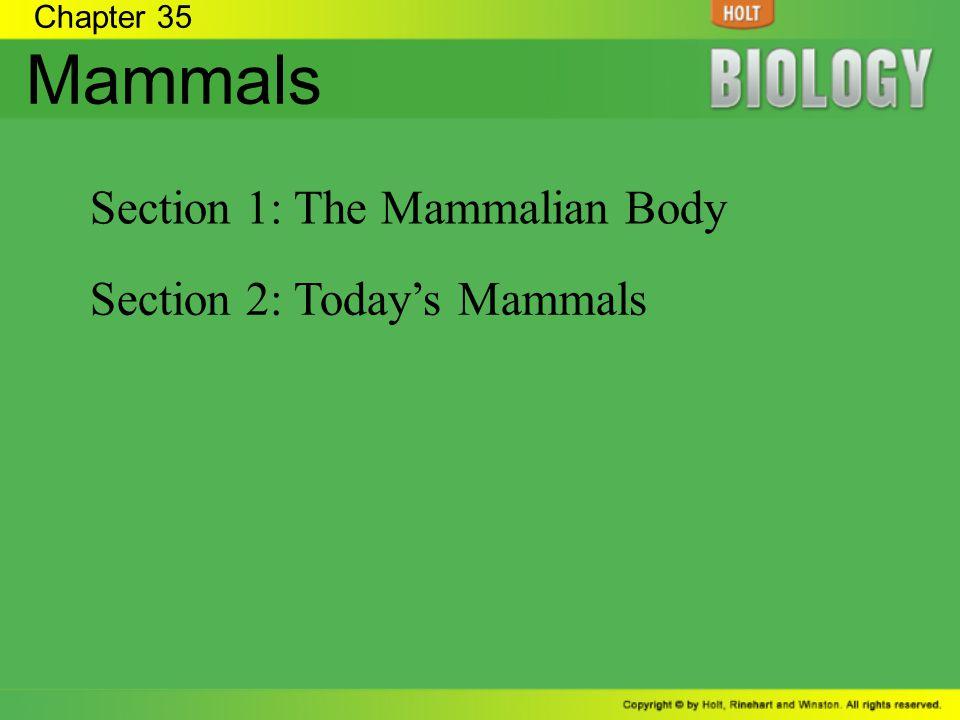 Chapter 35 Mammals Section 1: The Mammalian Body Section 2: Todays Mammals